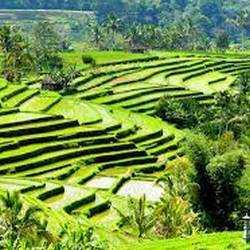 5. Jatiluwih Rice Terraces - 10 Unforgettable Bali Instagram Moments