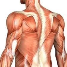 Back Muscle Groups to Concentrate On - Travel WOD Top Travel Workouts