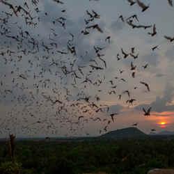 Battambang Bat Cave - 9 Must See Sites of Battambang